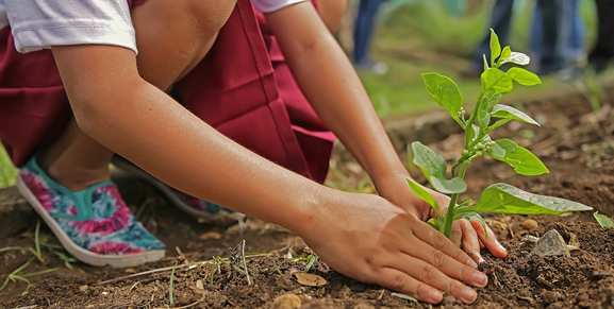 Le-Jardin-De-Catherine – jardinage pas cher – Dealabs