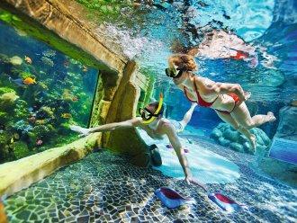 center parcs – découvrir la plongée – Dealabs