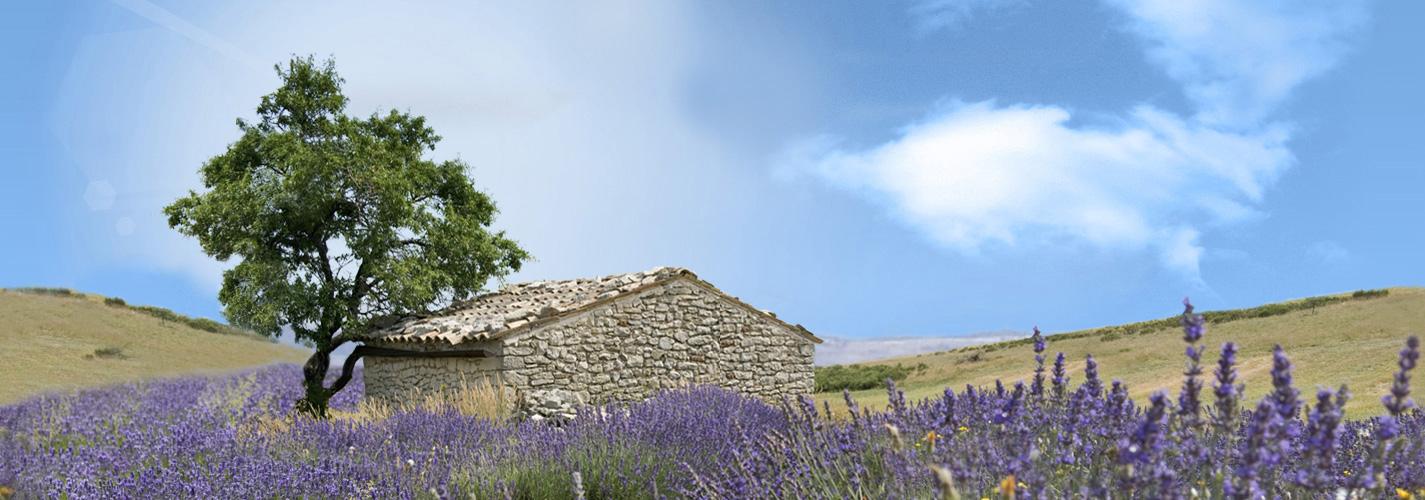 L'occitane – cosmétiques et soins de Provence – Dealabs