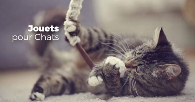 Miscota – animalerie en ligne pas cher – Dealabs