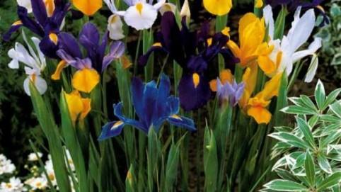 willemse – jardinerie en ligne pas cher – Dealabs
