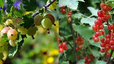willemse – fruits, herbes et aromates à planter soi-même – Dealabs