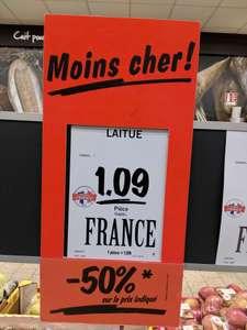 Laitue - Chambray-lès-Tours (37)