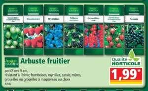Arbuste fruitier en pot