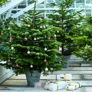 Sapins de Noël Naturels 100% remboursés en bon d'achat (utilisable le 26/12 uniquement) - Ex: Sapin Nordmann 175/200cm (Caudry - 59)