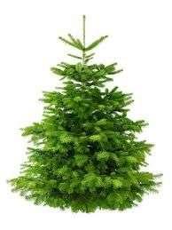 Distribution Gratuite de Sapins de Noël - Changy (42)
