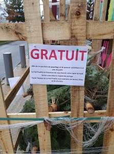 Sapin de Noël gratuit - Chanteloup-en-Brie (77)