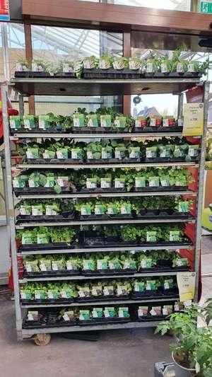 1 barquette de 6 plants de légumes achetée + 1 offerte (Cambrai 59)