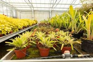 [Habitants Cherbourg-en-Cotentin] 8 000 plantes et des sachets de graines offerts - Cherbourg-en-Cotentin (50)