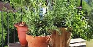 [Habitants] Distribution Gratuite de 20 Plants Fleurs + Plantes Aromatiques + Graines - Val-de-Reuil (27)