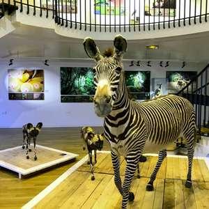 Entrée gratuite au Muséum d'Histoire Naturelle du Havre (76)