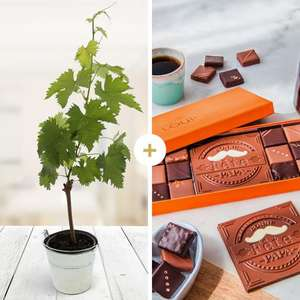 """Pied de Vigne + Boîte de Chocolats LOUIS """"Bonne fête Papa"""" (Livraison à domicile incluse)"""