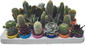 Cactus et succulentes - Variétés au choix