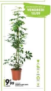 Grande plante verte - 125 cm