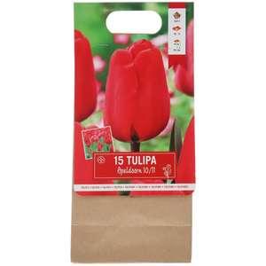 15 bulbes de tulipes (plusieurs coloris)
