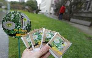 Distribution gratuite de kits de plantation (coquelicot, bleuet sauvage, grande marguerite, pavot de Californie) - Nantes Métropole (44)