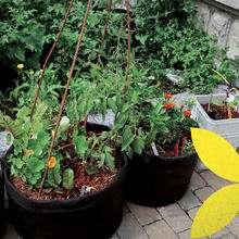 [Habitants] Distribution Gratuite de plantes à Elven (56)