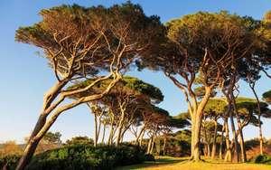 Distribution gratuite de 2000 arbres (arbousiers, chênes, cistes, genêts, pins maritimes, tamaris...) - Lège-Cap-Ferret (33)