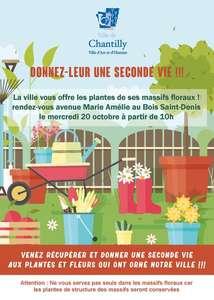 Distribution gratuite de plantes (bégonia tubéreux en mélange et gaura blanc) - Chantilly (60)