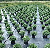 des milliers de plantes vertes au tarif unique de