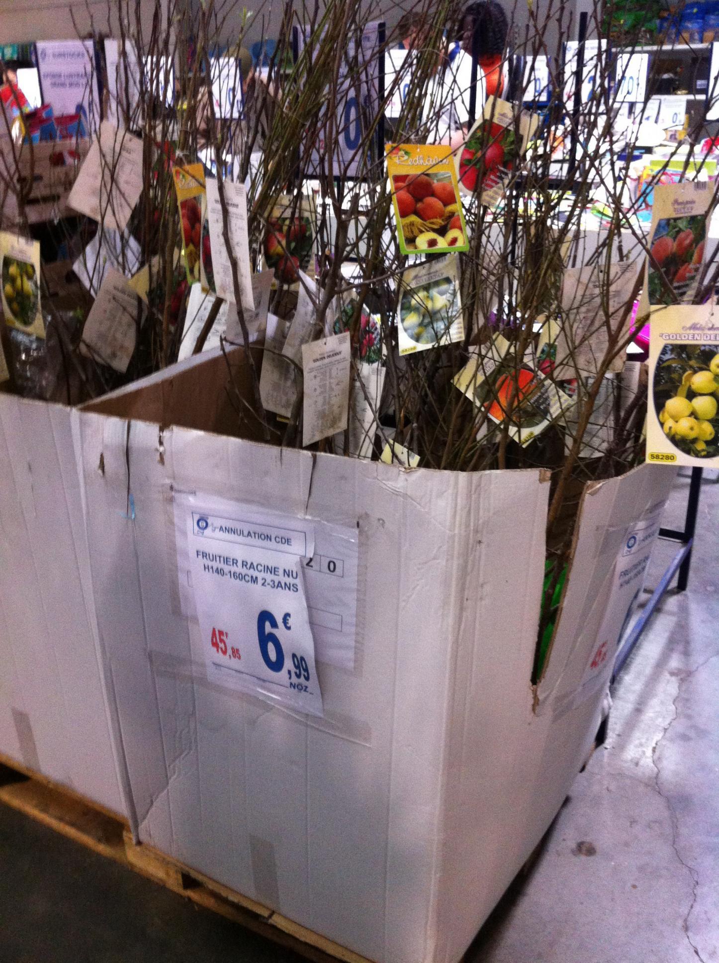 Arbres fruitiers - Hauteur 140/160cm, 2-3 ans