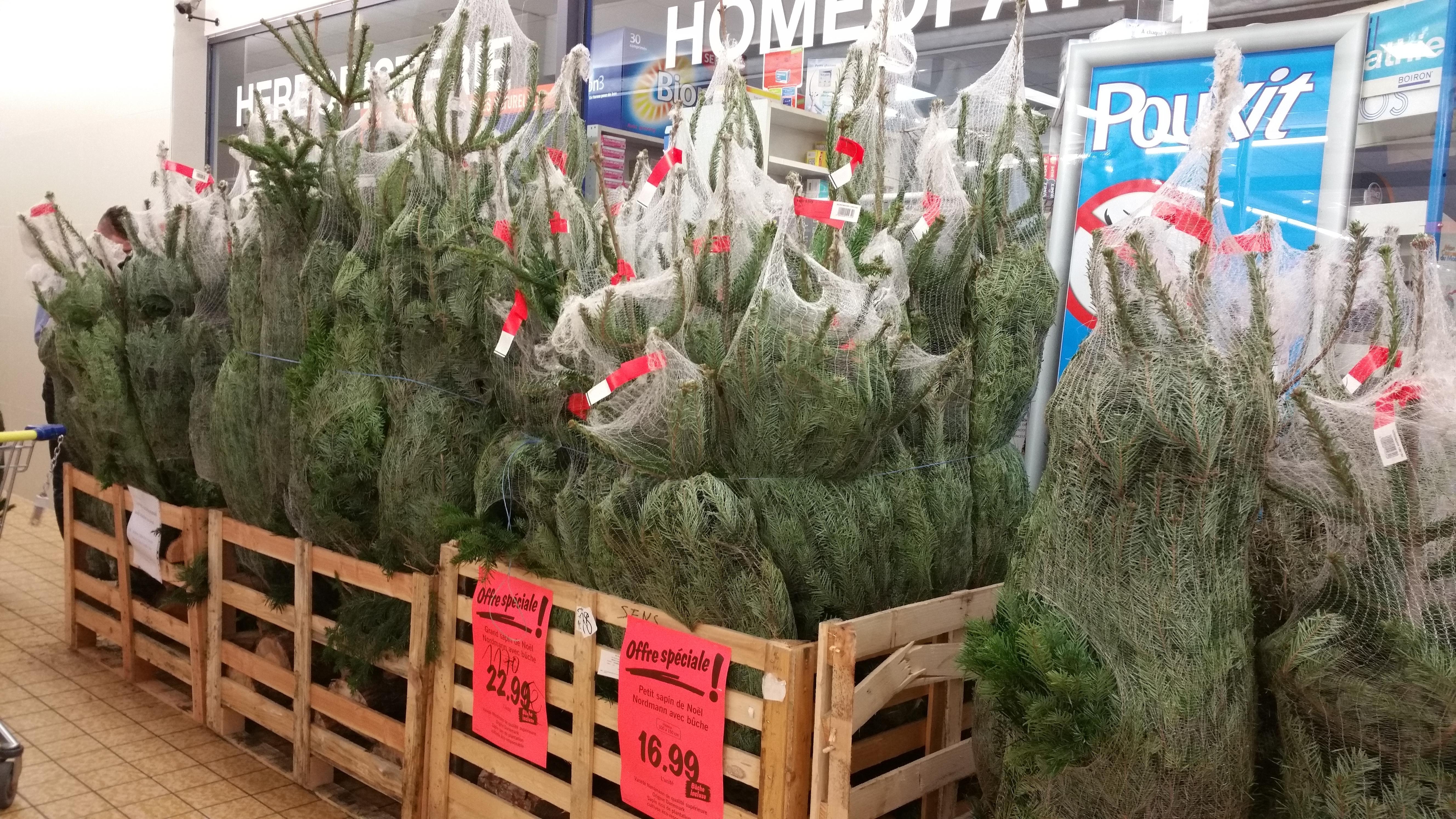 Sapin de Noël Nordmann (avec bûche) - 100 à 150 cm pour 16.99€ et 150 à 200 cm
