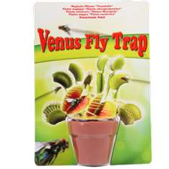 Plante carnivore Dionée attrape-mouche à cultiver