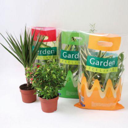 Lot de 3 plantes vertes