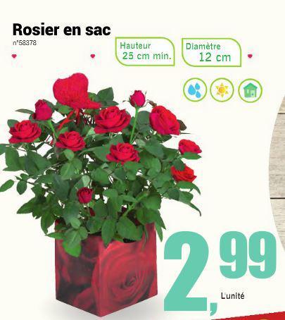 Sélection de rosiers (bouquets ou en pot) en promo pour la Saint-Valentin - Ex: Rosier