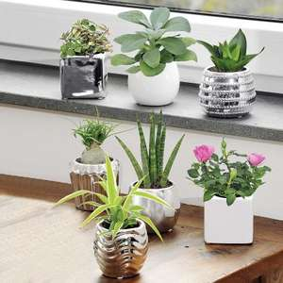 mini plante verte avec cache pot blanc ou argent diff rents mod les. Black Bedroom Furniture Sets. Home Design Ideas