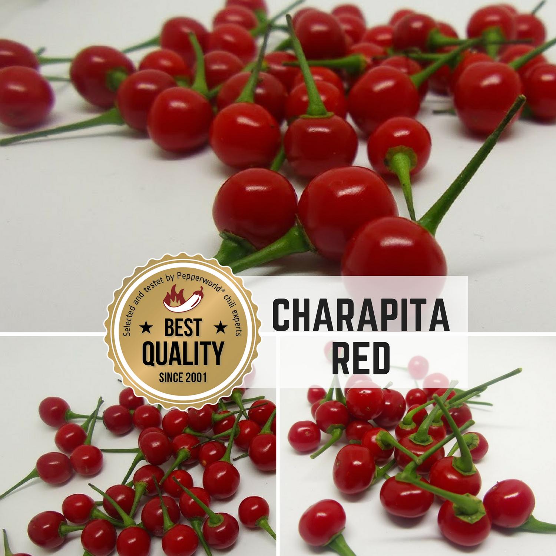 Sachet de 10 graines de piments rouges Charapita - frais de port inclus