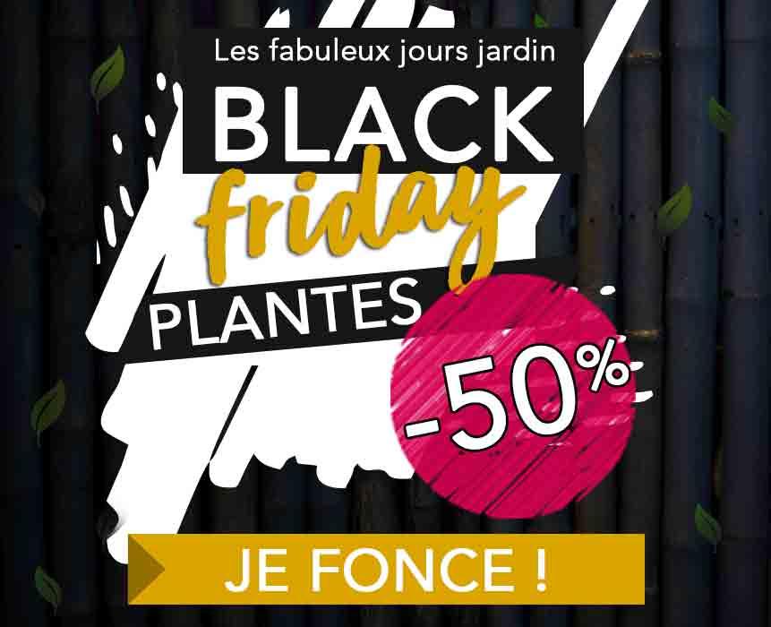 -50% sur une sélection de plante et bulbes
