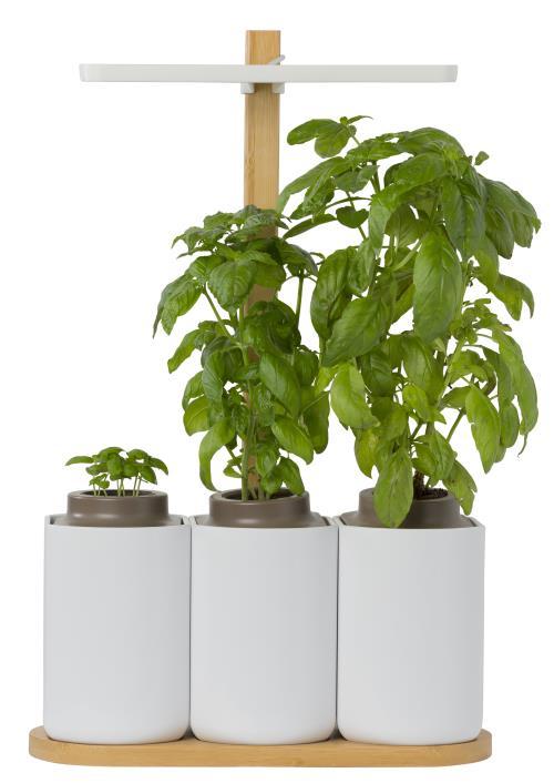 Potager d'intérieur autonome Prêt à pousser Smart Lilo + 6 capsules offertes en magasin