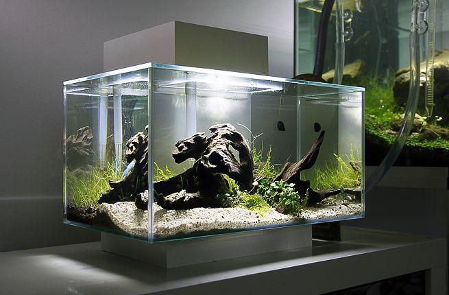 Aquarium Fluval Edge Glossy équipé blanc de 23L