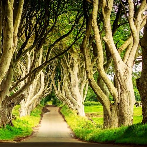 Circuit Game of Thrones : 8 jours en Irlande (par personne sur la base de 2 personnes)