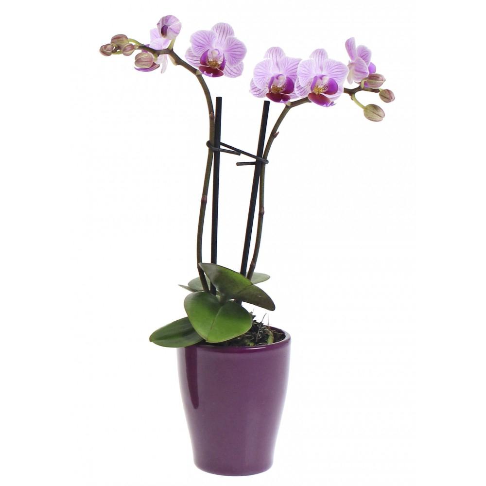Orchidée 2 tiges avec pot en céramique