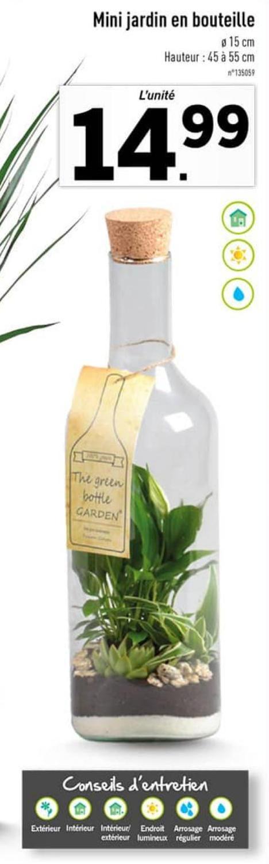 Décoration mini-jardin en bouteille en verre - 45 à 55 cm