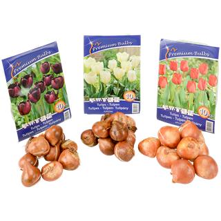 Lot de 10 bulbes de tulipes - Différentes couleurs
