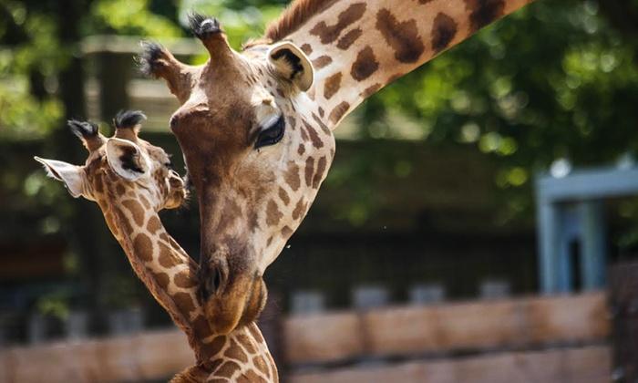Billet de noël : 1 entrée Adulte ou Enfant - au zoo Touroparc Romanèche-Thorins (71)