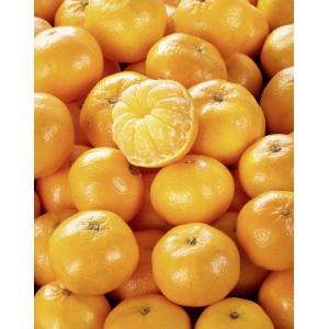 Filet de 2Kg de mandarines Clemenvilla