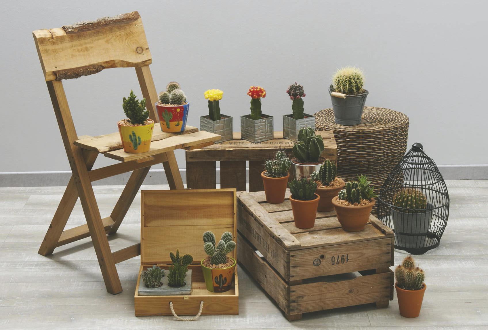 Sélection de Cactus en Promotion
