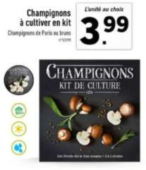 Kit de culture de champignons