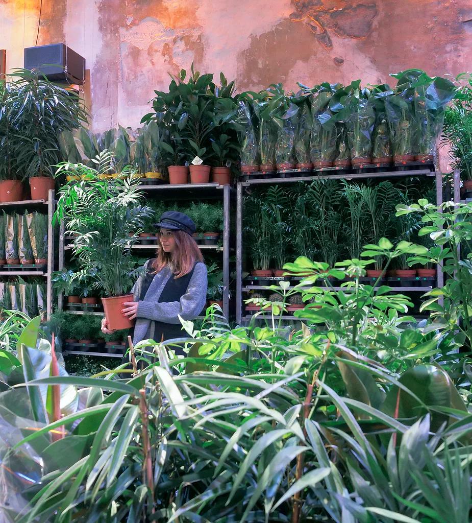 Grande vente de plantes à partir de 2€ - Paris (75)