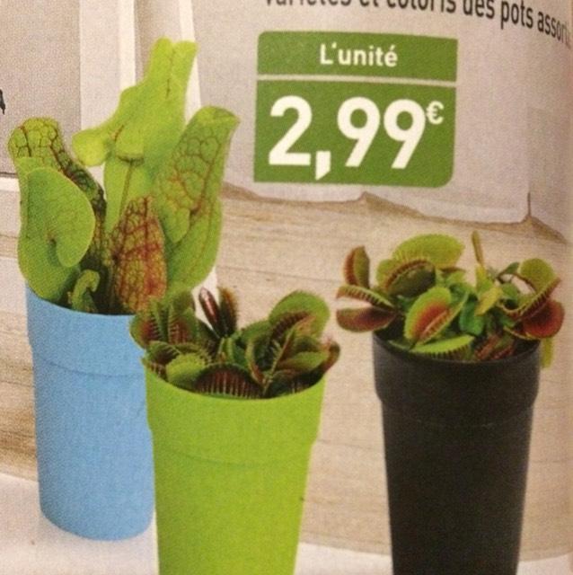 plante carnivore carrefour