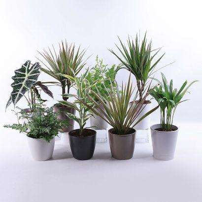 Plantes avec cache-pot céramique