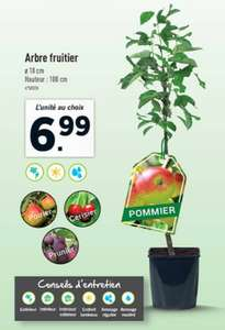 Sélection d'Arbres Fruitiers en Promotion - 1m + Pot