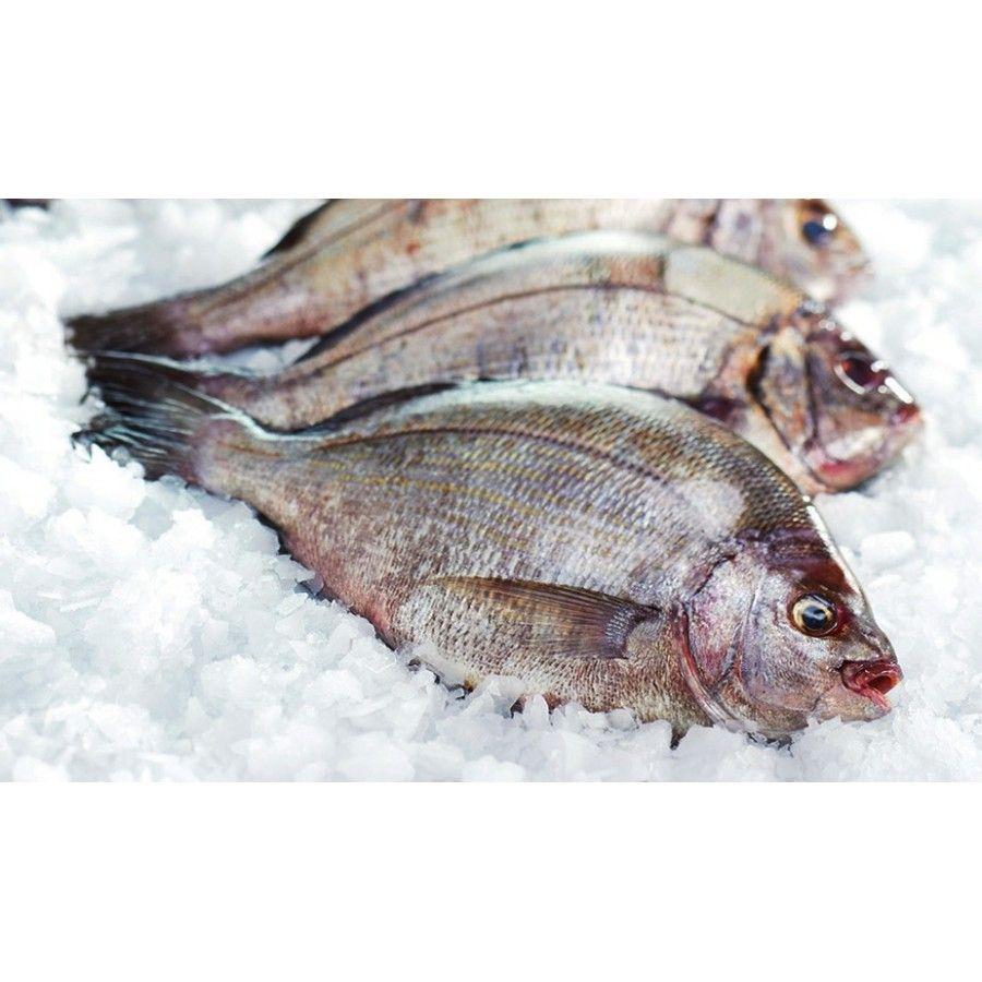 Dorade Grise pêchée en Atlantique Nord-Est - 1Kg