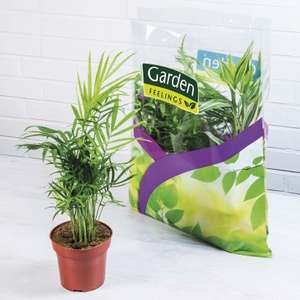 Lot de 3 plantes vertes en sac garden feelings 30 50 cm for Plantes vertes discount