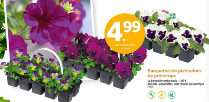 3 barquettes de plantations de Printemps (30 plantes)