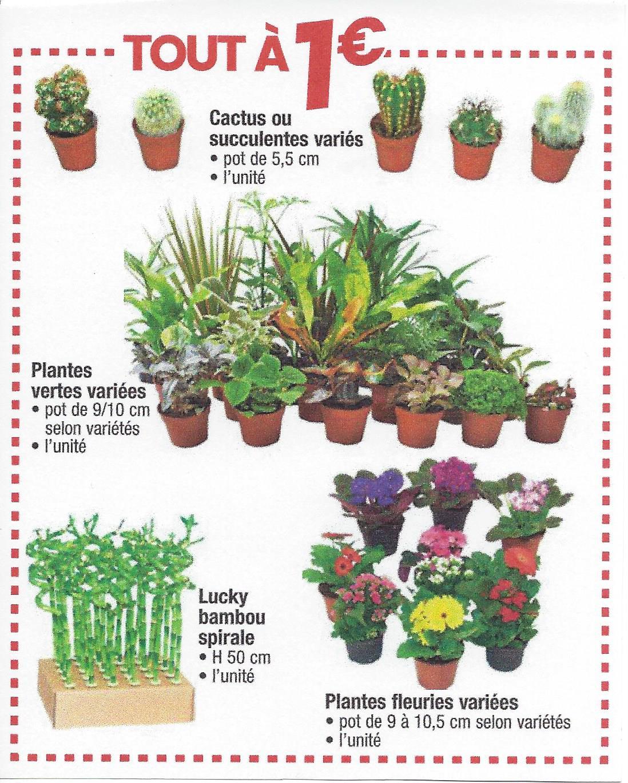 Cactus, succulentes, Bambous, plantes variées
